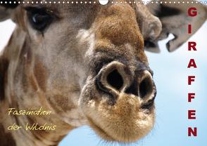 Giraffen – Faszination der Wildnis (Wandkalender 2021 DIN A3 quer) von Haase,  Nadine