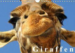 Giraffen / Geburtstagskalender (Wandkalender 2019 DIN A4 quer) von Stanzer,  Elisabeth