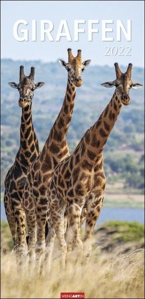 Giraffen Kalender 2022 von Weingarten