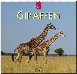 Giraffen von Redaktion Verlagshaus Würzburg,  Bildagentur