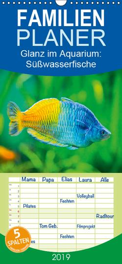 Glanz im Aquarium: Süßwasserfische – Familienplaner hoch (Wandkalender 2019 , 21 cm x 45 cm, hoch) von CALVENDO
