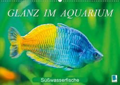 Glanz im Aquarium: Süßwasserfische (Premium, hochwertiger DIN A2 Wandkalender 2020, Kunstdruck in Hochglanz) von CALVENDO