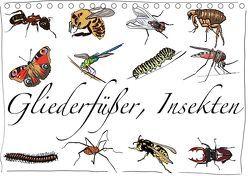 Gliederfüßer und Insekten (Tischkalender 2019 DIN A5 quer) von Conrad,  Ralf