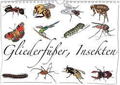 Gliederfüßer und Insekten (Wandkalender 2019 DIN A4 quer) von Conrad,  Ralf