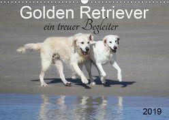 Golden Retriever ein treuer Begleiter (Wandkalender 2019 DIN A3 quer) von SchnelleWelten