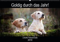 Goldig durch das Jahr! (Wandkalender 2019 DIN A2 quer) von Bohlmann,  Jennifer