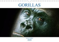 Gorillas – In der Freiheit (Wandkalender 2020 DIN A4 quer) von Robert,  Boris