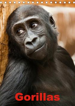 Gorillas (Tischkalender 2021 DIN A5 hoch) von Stanzer,  Elisabeth