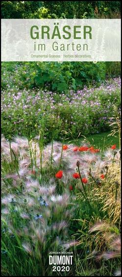 Gräser im Garten 2020 – DUMONT Wandkalender – Garten-Kalender – Hochformat 30,0 x 68,5 cm von Becker Jürgen, DUMONT Kalenderverlag