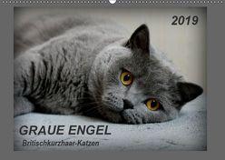 GRAUE ENGEL Britischkurzhaar-Katzen (Wandkalender 2019 DIN A2 quer) von Jacky-fotos,  k.A.