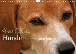 Graue Schnuten – Hunde in den besten Jahren (Wandkalender 2019 DIN A4 quer) von Grüttner,  Kerstin