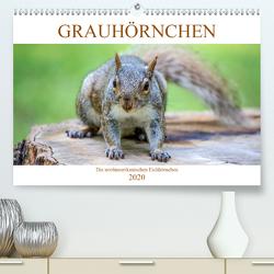 Grauhörnchen. Die nordamerikanischen Eichhörnchen. (Premium, hochwertiger DIN A2 Wandkalender 2020, Kunstdruck in Hochglanz) von pixs:sell@fotolia, Stock,  pixs:sell@Adobe
