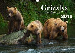 Grizzlys – Der Kalender (Wandkalender 2018 DIN A3 quer) von Steinwald,  Max