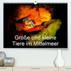 Große und kleine Tiere im Mittelmeer (Premium, hochwertiger DIN A2 Wandkalender 2020, Kunstdruck in Hochglanz) von Hampe,  Gabi