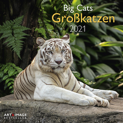 Großkatzen 2021 – Wand-Kalender – Broschüren-Kalender – A&I – 30×30 – 30×60 geöffnet