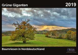 Grüne Giganten – Baumriesen in Norddeutschland 2019 von Kriedemann,  Karsten