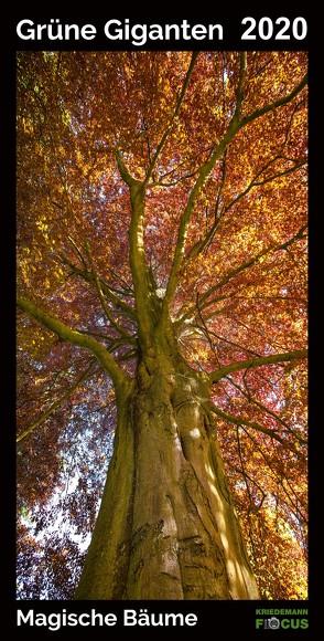 Grüne Giganten – Magische Bäume 2020 von Kriedemann,  Karsten