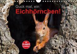 Guck mal, ein Eichhörnchen! (Wandkalender 2019 DIN A4 quer) von Brackhan,  Margret