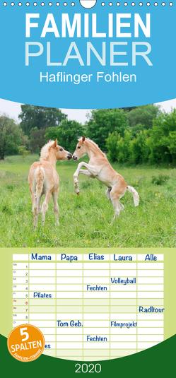 Haflinger Fohlen – Familienplaner hoch (Wandkalender 2020 , 21 cm x 45 cm, hoch) von Menden,  Katho