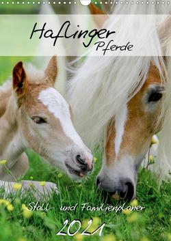 Haflinger Pferde – Stall- und Familienplaner 2021 (Wandkalender 2021 DIN A3 hoch) von Natural-Golden.de