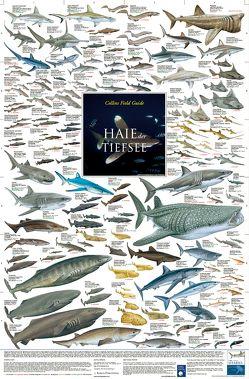 Haie der Tiefsee von Welter-Schultes,  F W