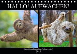Hallo! Aufwachen! Kann bitte mal jemand das Faultier wecken? (Tischkalender 2019 DIN A5 quer) von Hurley,  Rose
