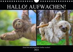 Hallo! Aufwachen! Kann bitte mal jemand das Faultier wecken? (Wandkalender 2021 DIN A4 quer) von Hurley,  Rose