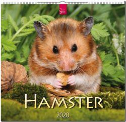 Hamster von Verlagshaus Würzburg Redaktion,  Bildagentur