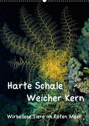 Harte Schale – weicher Kern, wirbellose Tiere im Roten Meer (Wandkalender 2018 DIN A2 hoch) von Suttrop,  Christian