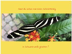 Hast du schon mal einen Schmetterling in Schwarz-Weiß gesehen? von Buss,  Björn-Lars