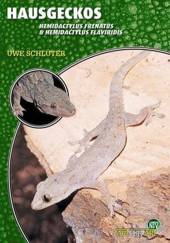 Hausgeckos von Schlüter,  Uwe