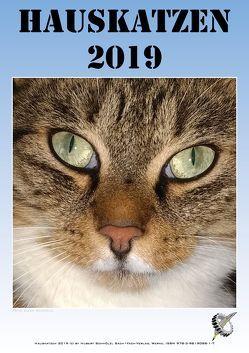 Hauskatzen 2019 von Schmölzl,  Hubert