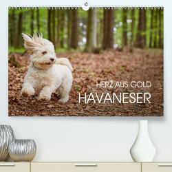 Havaneser – Herz aus Gold (Premium, hochwertiger DIN A2 Wandkalender 2021, Kunstdruck in Hochglanz) von Mayer,  Peter