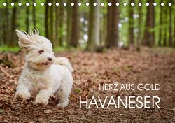Havaneser – Herz aus Gold (Tischkalender 2021 DIN A5 quer) von Mayer,  Peter