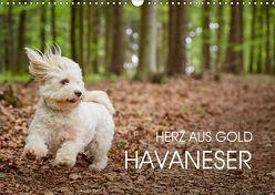 Havaneser – Herz aus Gold (Wandkalender 2019 DIN A3 quer) von Mayer,  Peter