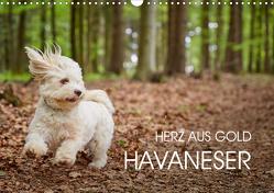 Havaneser – Herz aus Gold (Wandkalender 2021 DIN A3 quer) von Mayer,  Peter