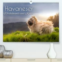 Havaneser – Wirbelwinde aus Kuba (Premium, hochwertiger DIN A2 Wandkalender 2021, Kunstdruck in Hochglanz) von Hollstein,  Alexandra