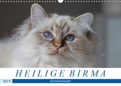 Heilige Birma Katzen (Wandkalender 2019 DIN A3 quer) von Münch,  Michaela