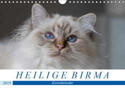 Heilige Birma Katzen (Wandkalender 2019 DIN A4 quer) von Münch,  Michaela