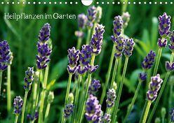 Heilpflanzen im Garten (Wandkalender 2019 DIN A4 quer) von Fettweis,  Andrea