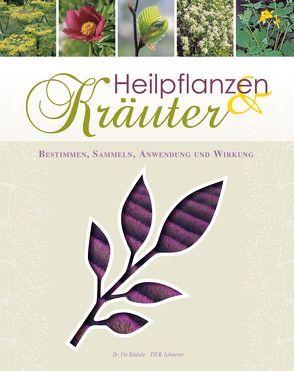Heilpflanzen & Kräuter von Künkele,  Dr. Ute, Lohmeyer,  Till R.