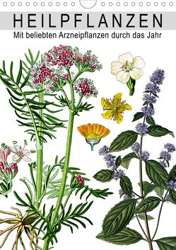 Heilpflanzen (Wandkalender 2021 DIN A4 hoch) von bilwissedition.com Layout: Babette Reek,  Bilder: