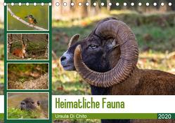 Heimatliche Fauna (Tischkalender 2020 DIN A5 quer) von Di Chito,  Ursula