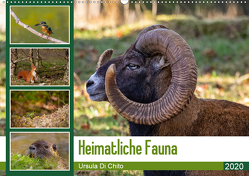 Heimatliche Fauna (Wandkalender 2020 DIN A2 quer) von Di Chito,  Ursula
