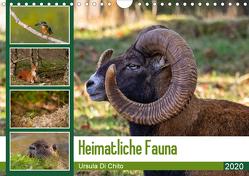 Heimatliche Fauna (Wandkalender 2020 DIN A4 quer) von Di Chito,  Ursula