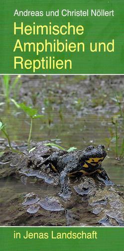 Heimische Amphibien und Reptilien von Fiedler,  Werner, Nöllert,  Andreas, Nöllert,  Christel, Nöllert,  Lasse