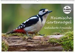 Heimische Gartenvögel Gefiederte Freunde (Wandkalender 2019 DIN A2 quer) von Wilczek,  Dieter-M.