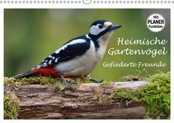 Heimische Gartenvögel Gefiederte Freunde (Wandkalender 2019 DIN A3 quer)