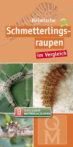 Heimische Schmetterlingsraupen im Vergleich von Quelle & Meyer Verlag