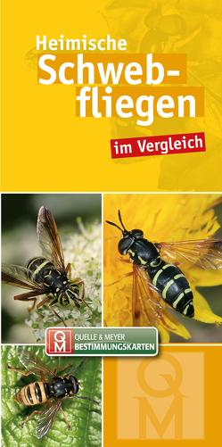 Heimische Schwebfliegen im Vergleich von Quelle & Meyer Verlag